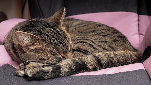 Hoe kan ik ervoor zorgen dat ik lekker slaap?